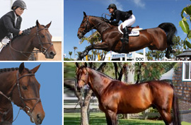 World Class Stallion Breeding Services
